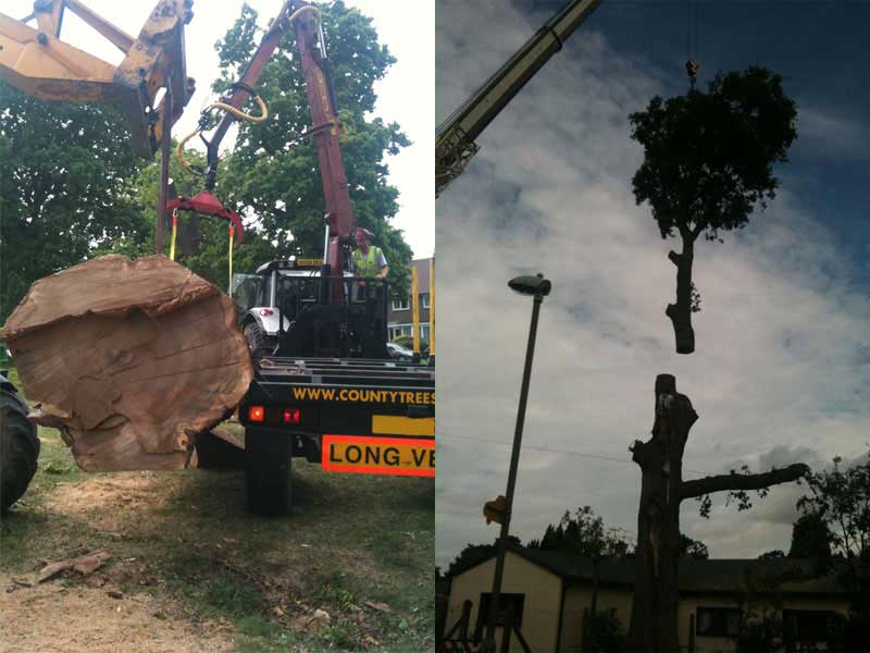 timber extraction